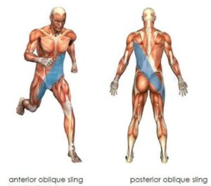 Illustration of Oblique and Anterior Sling - a healthy sling system does more than support the core